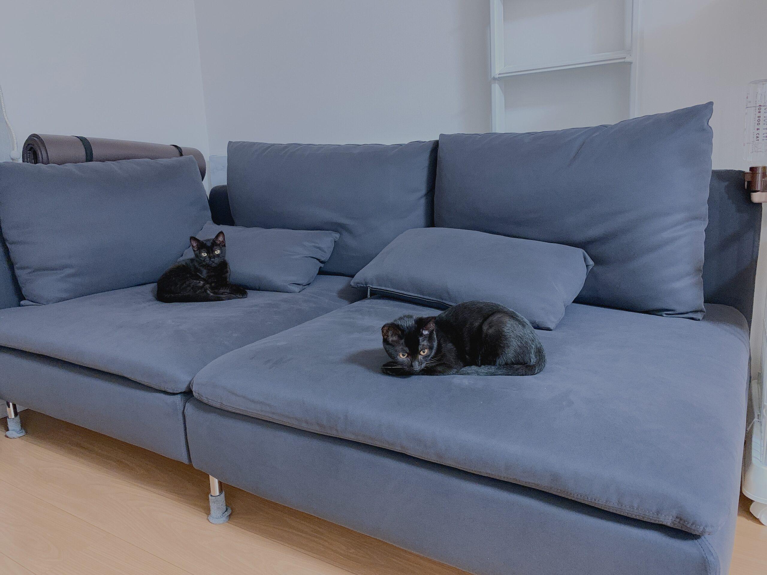 ソファを占領するスンデとチヂミ